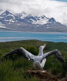 On voit albatros Baudelaire. L'oiseau est au sol avec ses grandes ailes déployées, il s'apprête à s'envoler. Il pourra alors tirer profit de cet avantage en vol.